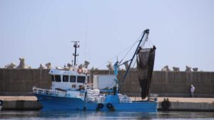 Port Tomis Fischerboote