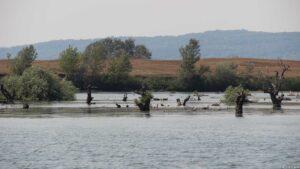 Untiefe Donau
