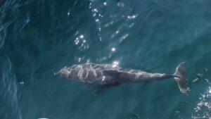Schwarzes Meer - 5 mal Delphine