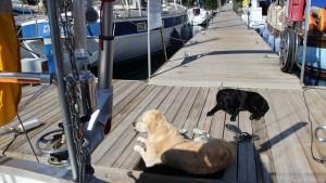 Hunde Global Sailing
